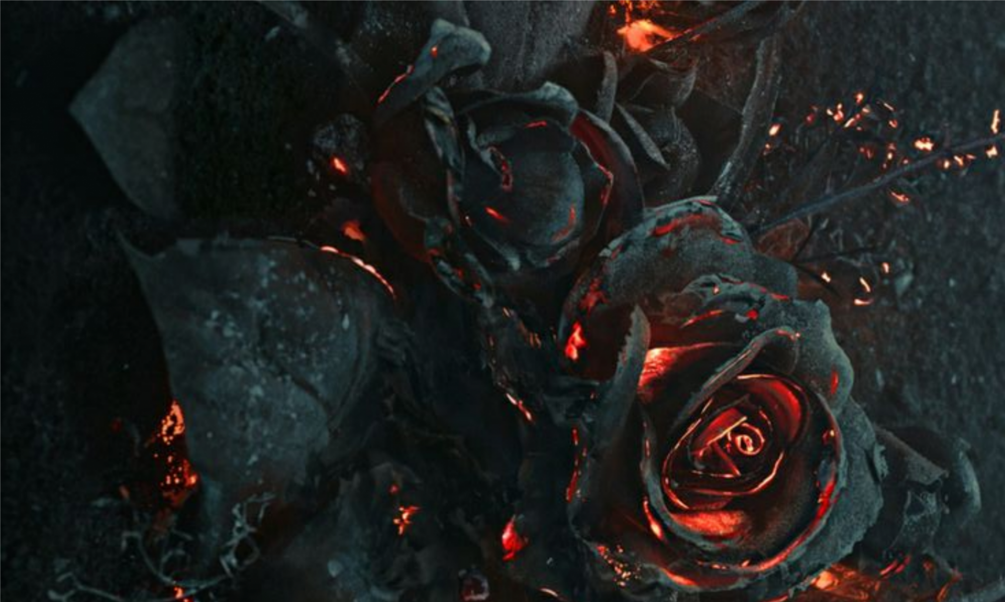 Rosa de Foc